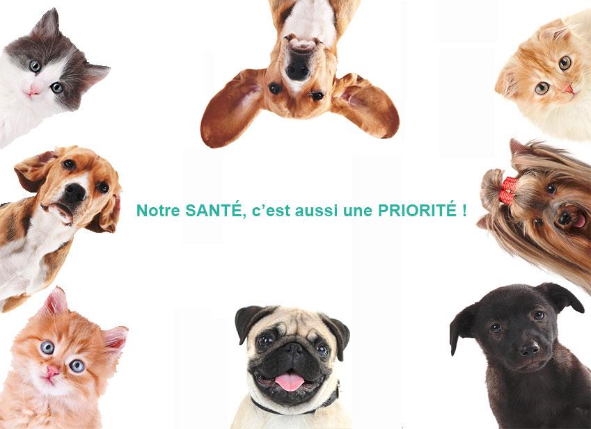 assurance pour animaux